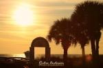 Link to Sun Lit Palm Trees Fine Art Photography Print
